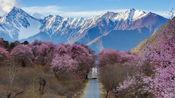 为什么说,错过了西藏林芝,你就错过了中国最美春天?