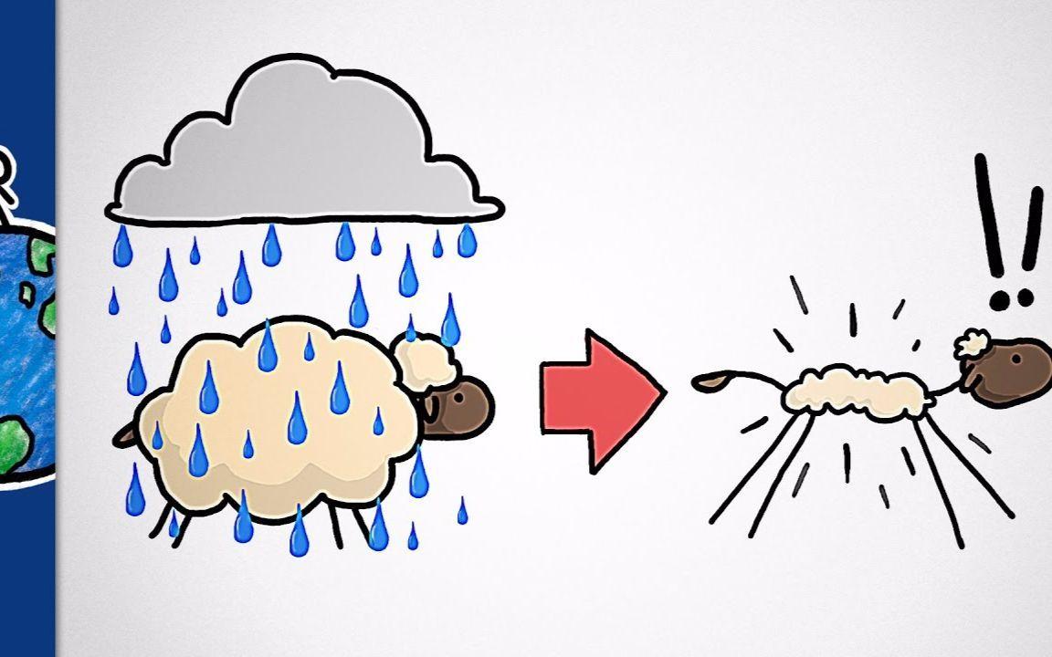为什么洗羊毛衫会缩水,而雨中的绵羊不缩水?