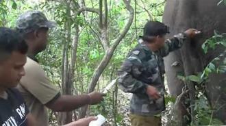 护林队员给野生大象打针,全程很揪心