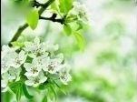 李胜素与梨花颂