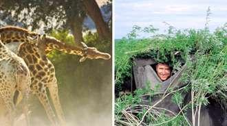 马丁·科尔贝克,追拍长颈鹿30天