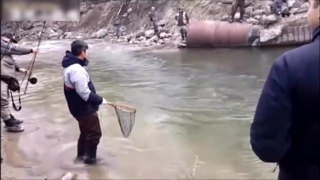 几十号人围着小溪钓鱼,里面都是大鱼