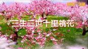阳光百合广场舞《三生三世十里桃花》