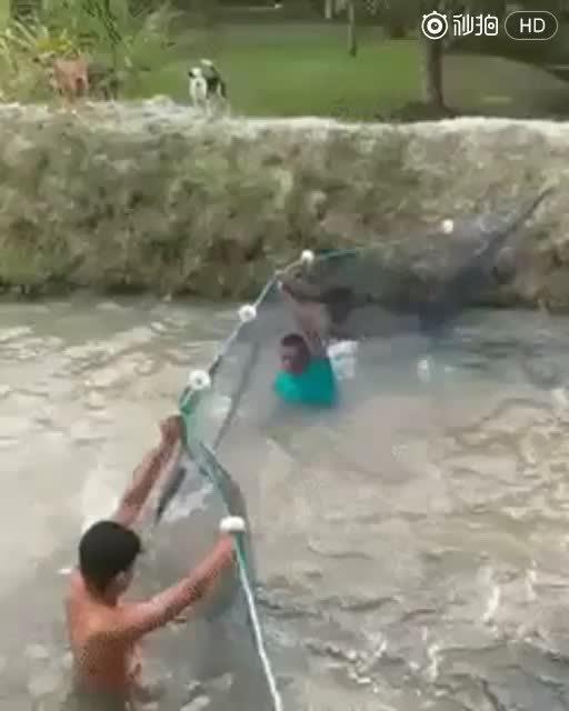 现在的鱼都会群体攻击!