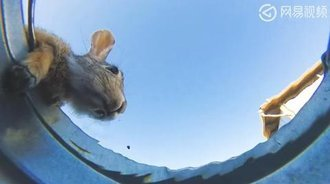 独特的角度拍摄动物喝水