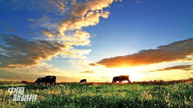 幻想过策马奔腾的生活吗,一首《醉在草原唱情歌》,最美草原天籁