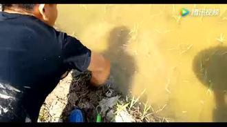扣多少个洞,才能抓住一个黄鳝!