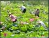 初中地理:中国的气候特征(科教课堂)(4分钟)...