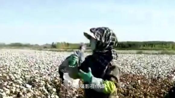 新疆棉花地里大妈唱情歌