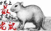 千万年以前,老鼠和兔子傻傻分不清楚?