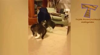 猫咪看到镜子里另一个自己后,疯狂自嗨