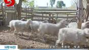 金塔:农业保险为脱贫攻坚保驾护航
