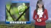 陕西电视台【百家碎戏】