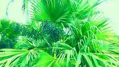 厦门环岛路风景(东段)品名影像2014