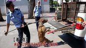西安:32岁女子狂犬病发作身亡 全城打狗