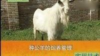 关中奶山羊养殖技术