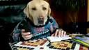额的个神!你见过会看书打电话的狗吗服务好[www.3158mu.com](流畅)