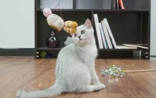 自制趣味逗猫棒【举起爪儿来】