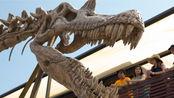 《侏罗纪世界》中的棘龙骨架真的属于《侏罗纪公园3》的棘龙吗?