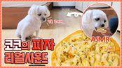 【iluliy】可可的真声披萨Mukbang狗吃披萨……!※这是给狗吃的披萨(2019年8月30日21时55分)