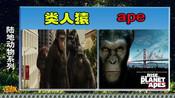 词趣词典 类人猿ape《电影猿族崛起为何用ape》-词趣词典之鸟类昆虫动物系列篇