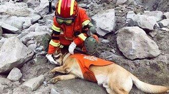 这条狗这几天红了!茂县救灾成英雄,灾后出境惹哭无数网友
