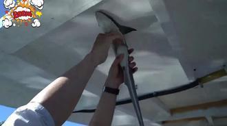偶钓奇葩海鱼,能吸附在天花板