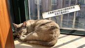 【猫和闲聊#02】看到猫咪晒太阳的时候就会无比期盼春天,等待着和朋友们阳光下相聚的日子
