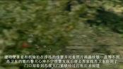 电视剧《田姐辣妹》佳慧为姐姐割爱放弃苏卫东
