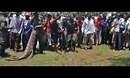 乌干达捕获80岁食人巨鳄-新蓝网-视频-娱乐-新闻