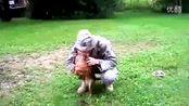 狗是如何迎接从远方战场回来的主人呢!感人一幕!