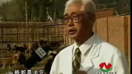 肉狗养殖,(教材)养殖技术