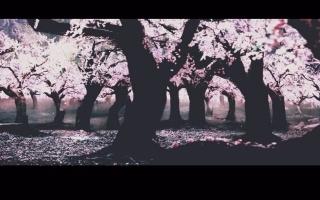 【夜华x白浅x墨渊】春秋