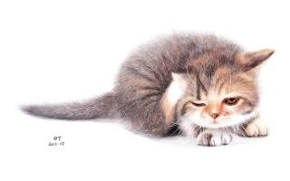 OY手绘·彩色圆珠笔画 猫