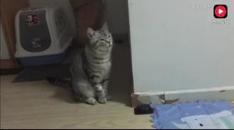 主人正在听歌,猫咪开始跟着哼唱起来,还不许主人一起唱