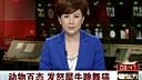 """野猪抢食惹犀牛发怒(http://www.58baidu.cn)猫咪""""闻乐起舞"""""""