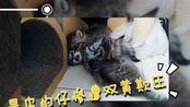【猫小片】幼儿园里最皮的仔惨遭双黄欺压