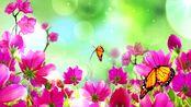 艳丽花朵蝴蝶(有音乐)高清晚会背景视频素材