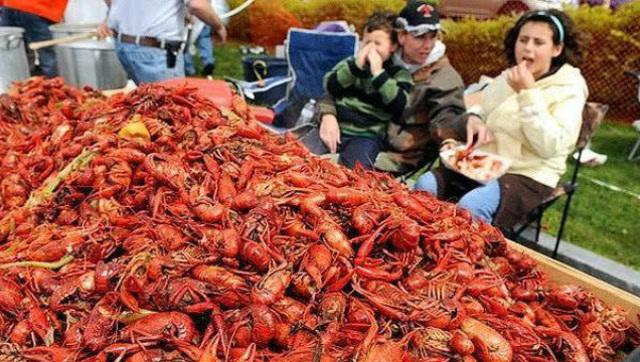 德国小龙虾泛滥成灾,当地群众哭诉,吃都吃不完呀!