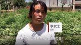 辛苦种的2000个西瓜一夜之间遭刀砍 农妇:良心不会痛吗