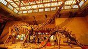 天天低碳之上海自然博物馆
