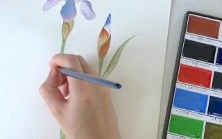 【隐世之国】水彩绘画视频第四弹——《鸢尾花》