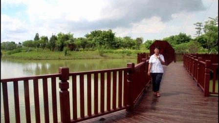 深圳福田红树林生态公园拍摄