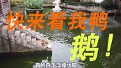 上海VLOG|城隍庙豫园真不应该去吗!?100块真的吃到呕!