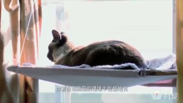 如何建立一个猫咪基地?