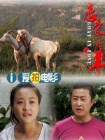 恋爱的羊(剧情片)