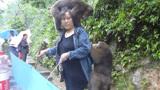 峨眉山猴子最怕的东西,带上一个在身上,保准没猴子骚扰你