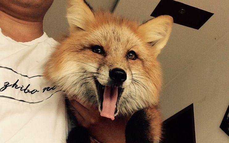 【彩狐世家】如此磨人的小妖精,你受得了吗