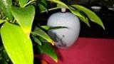 茶养道课堂:咏茶名句(6)苏轼茶诗之《送南屏谦师》
