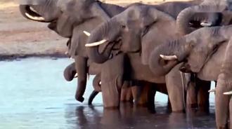 大象是最强壮的动物,狮子老虎犀牛基本不敢吭声